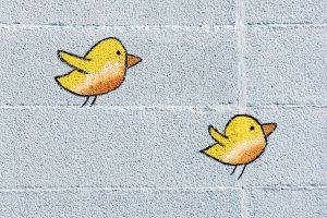 two-cute-little-yellow-birds-on-a-wall-P6E8GBR-300x200 Pro odborníky